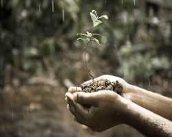 Pflanze erwacht zu neuem Leben
