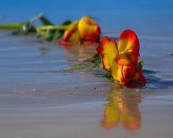 verwelkte Blume kam nie zum Erblühen